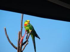 Papouščí den na Rozkoši se vydařil