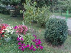 Květa Šmídová, ulice Pavla Wonky